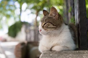 イスタンブール 史跡横のネコの写真素材 [FYI03821524]