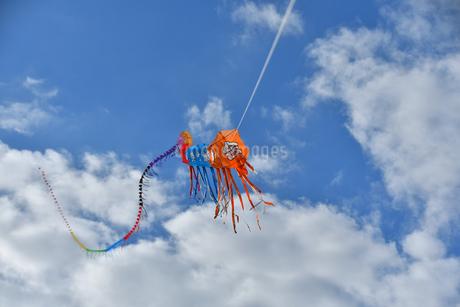 青空に連凧の写真素材 [FYI03821757]