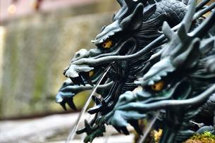 龍から水が出る手水舎の写真素材 [FYI03821771]