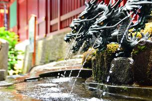 龍から水が出る手水舎の写真素材 [FYI03821772]