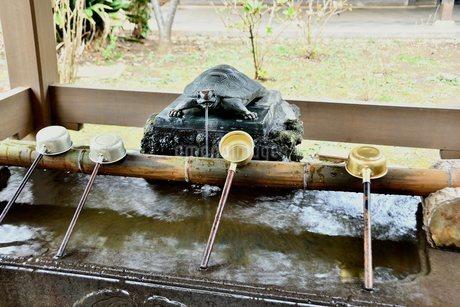 亀から水が出る手水舎の写真素材 [FYI03821774]