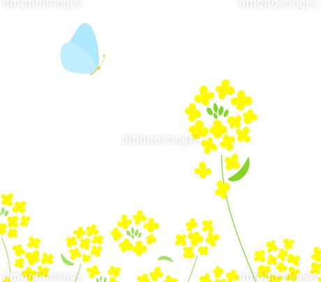 菜の花と蝶々 背景イラストのイラスト素材 [FYI03821807]