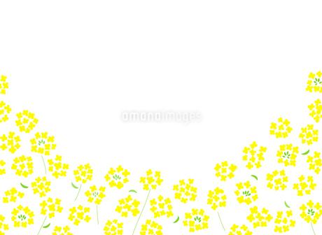 菜の花 背景素材のイラスト素材 [FYI03821811]