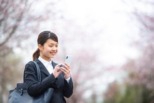 桜並木の前でスマホを操作するフレッシャーズの写真素材 [FYI03821854]