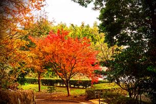公園の紅葉の写真素材 [FYI03821978]