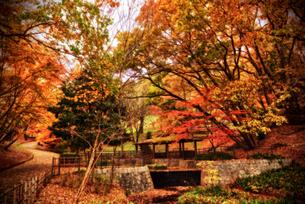 公園の紅葉の写真素材 [FYI03821979]
