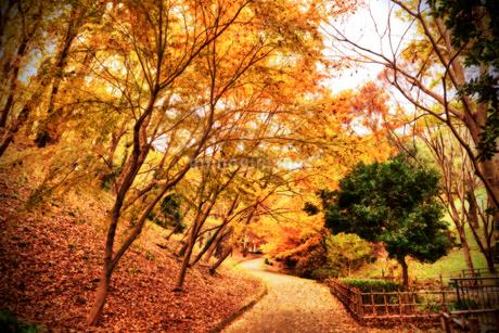 公園の紅葉の写真素材 [FYI03821980]