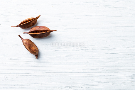Dried Akebia fruit on white background. Medicinal plant,spice,herb concept.の写真素材 [FYI03822076]