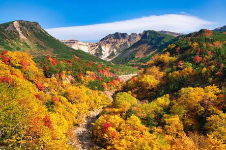 十勝岳温泉の紅葉の写真素材 [FYI03822098]