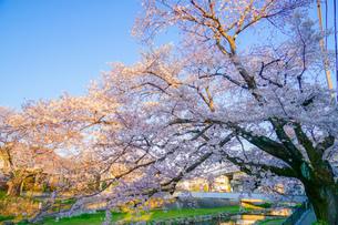 春の野川(東京都調布市)の写真素材 [FYI03822112]