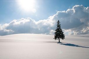 雪原に立つマツの木と太陽の写真素材 [FYI03822126]