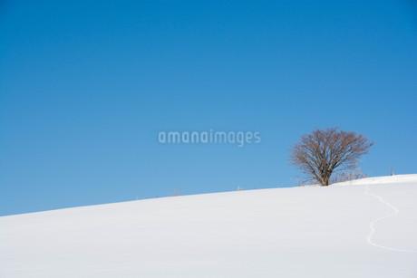 雪の丘の冬木立と青空の写真素材 [FYI03822140]
