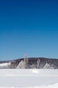 寒い朝の雪原と冬の青空の写真素材 [FYI03822194]
