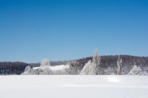 寒い朝の雪原と冬の青空の写真素材 [FYI03822195]