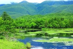 知床五湖 緑の一湖の写真素材 [FYI03822228]