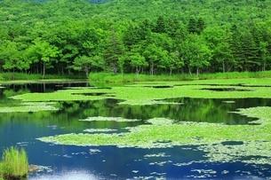 知床五湖 緑の一湖の写真素材 [FYI03822234]
