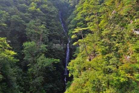 不動の滝 (群馬県吾妻郡長野原町)の写真素材 [FYI03822535]