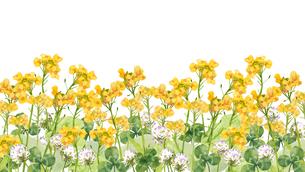 菜の花とクローバーのイラスト素材 [FYI03822553]