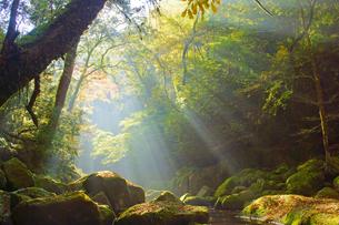 秋の菊池渓谷の写真素材 [FYI03822557]