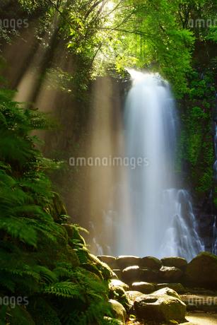 白糸の滝の写真素材 [FYI03822655]