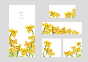 菜の花フレーム&バナーのイラスト素材 [FYI03822899]