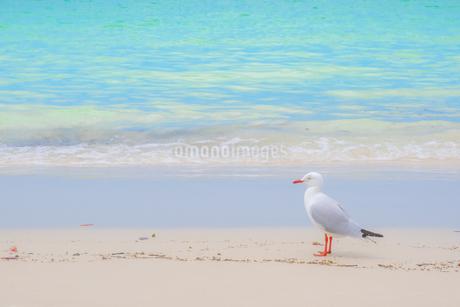 浜辺のカモメの写真素材 [FYI03823044]