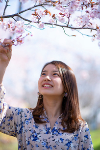 桜を見上げる若い女性の写真素材 [FYI03823107]