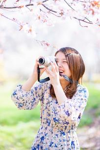 桜の写真を撮る若い女性の写真素材 [FYI03823112]