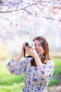 桜の写真を撮る若い女性の写真素材 [FYI03823113]