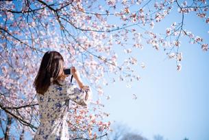 桜の写真を撮る若い女性の後ろ姿の写真素材 [FYI03823119]