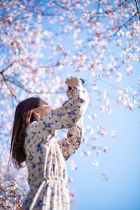 桜の写真を撮る若い女性の写真素材 [FYI03823121]