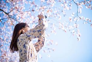 桜の写真を撮る若い女性の写真素材 [FYI03823122]