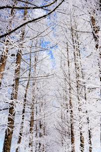 霧氷の写真素材 [FYI03823236]