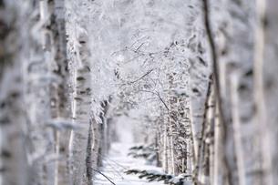 霧氷の写真素材 [FYI03823237]