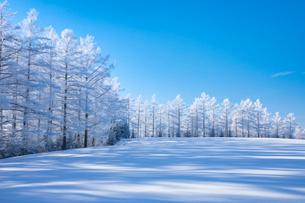 霧氷のカラマツ並木の写真素材 [FYI03823513]