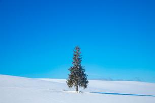 クリスマスツリーの木の写真素材 [FYI03823517]