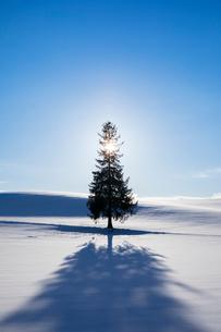 クリスマスツリーの木の写真素材 [FYI03823525]