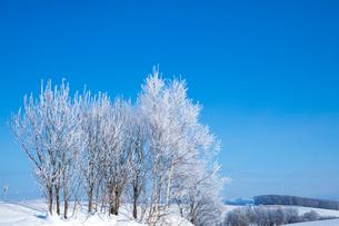 霧氷の木と青空の写真素材 [FYI03823536]