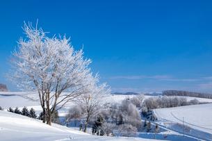 美瑛の丘と霧氷木々の写真素材 [FYI03823540]