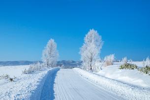 雪道と霧氷の木々の写真素材 [FYI03823541]