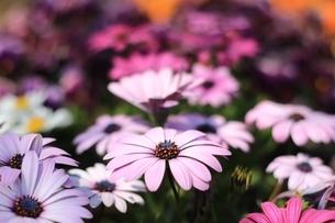 春の花の写真素材 [FYI03823547]
