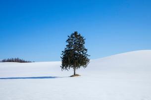 春よ来いの木の写真素材 [FYI03823548]