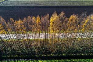 防風林の空撮の写真素材 [FYI03823793]