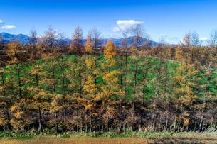 防風林の空撮の写真素材 [FYI03823795]