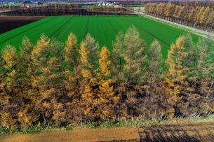 防風林の空撮の写真素材 [FYI03823796]