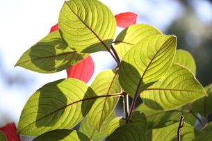 ブラジルの新緑の写真素材 [FYI03823871]