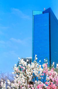 高層ビルと花の写真素材 [FYI03823884]