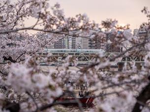 夕暮れ、桜の間から見える隅田川の鉄橋を渡る電車の写真素材 [FYI03823935]