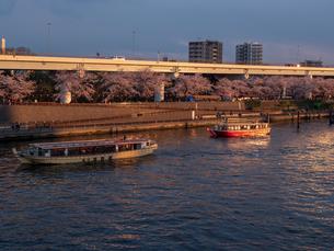 夕暮れ、花見を楽しむ隅田川の屋形船の写真素材 [FYI03823937]
