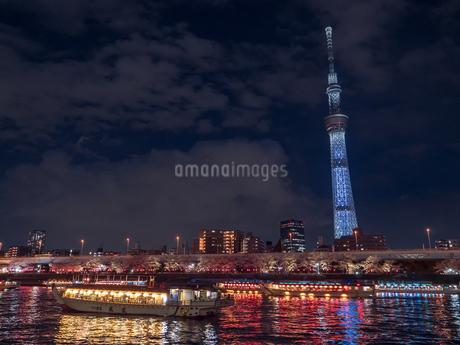 ライトアップされたスカイツリーと、花見を楽しむ隅田川の屋形船の写真素材 [FYI03823940]